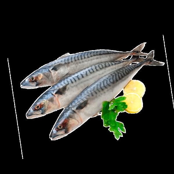 скумбрия белая или красная рыба